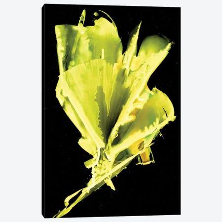 Burst Of Green Canvas Print #MME3} by Michelle Angella Meijs Canvas Art