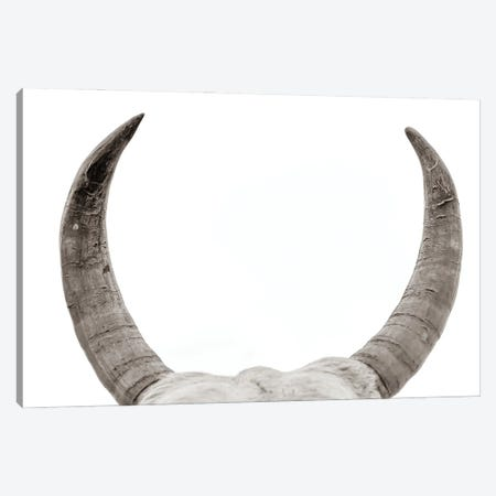 Horns Canvas Print #MMJ14} by Mark MacLaren Johnson Canvas Art Print