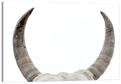Horns Canvas Art Print