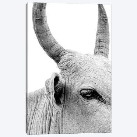 Bull Portrait Canvas Print #MMJ24} by Mark MacLaren Johnson Canvas Artwork