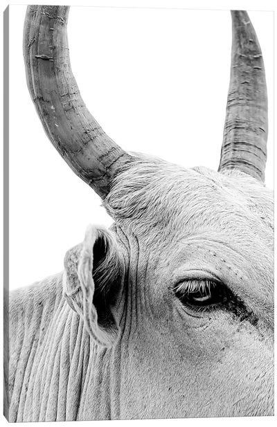 Bull Portrait Canvas Art Print
