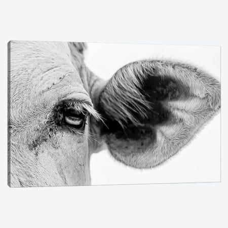 Bull's Eye Canvas Print #MMJ25} by Mark MacLaren Johnson Canvas Artwork