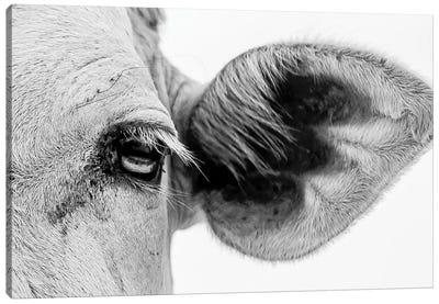 Bull's Eye Canvas Art Print