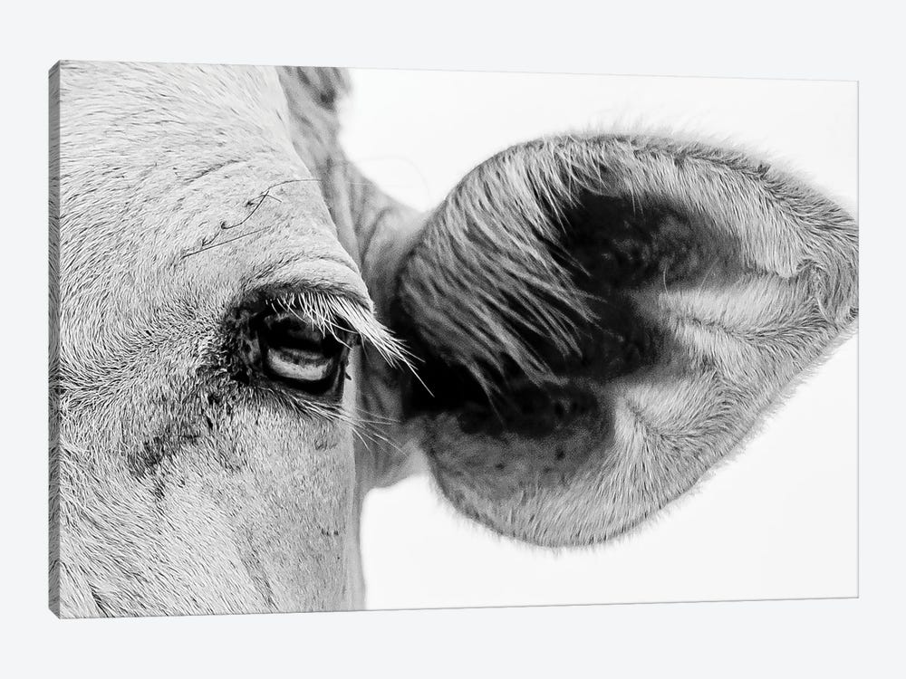 Bull's Eye by Mark MacLaren Johnson 1-piece Canvas Art Print