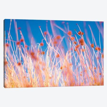 Desert Flowers Canvas Print #MMJ51} by Mark MacLaren Johnson Canvas Art