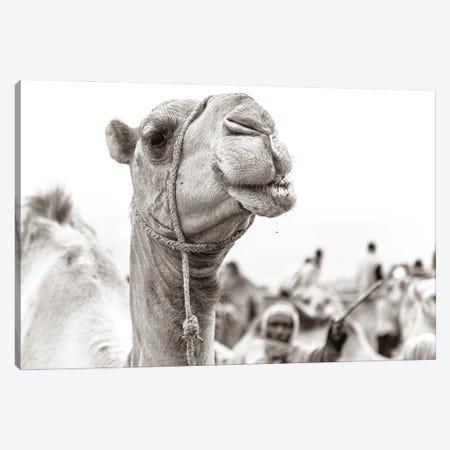 Camel Portrait Canvas Print #MMJ8} by Mark MacLaren Johnson Canvas Print