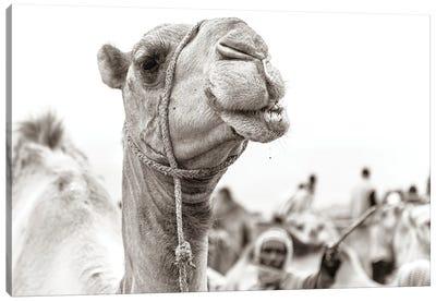 Camel Portrait Canvas Art Print