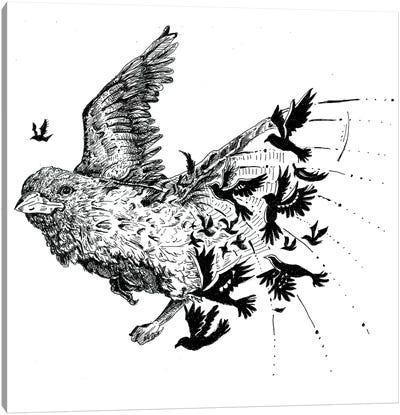 Birdz Canvas Art Print