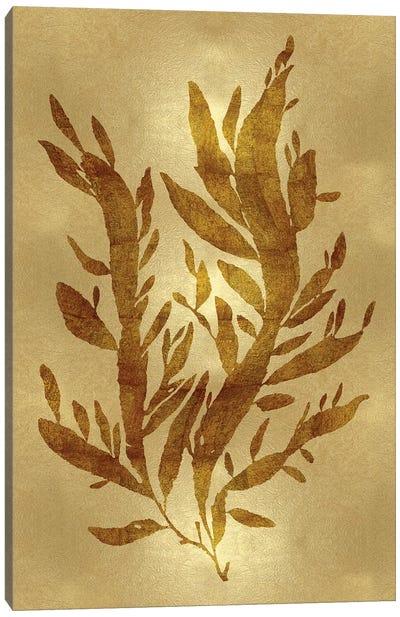 Sea Life Series: Gold IV Canvas Print #MMR14