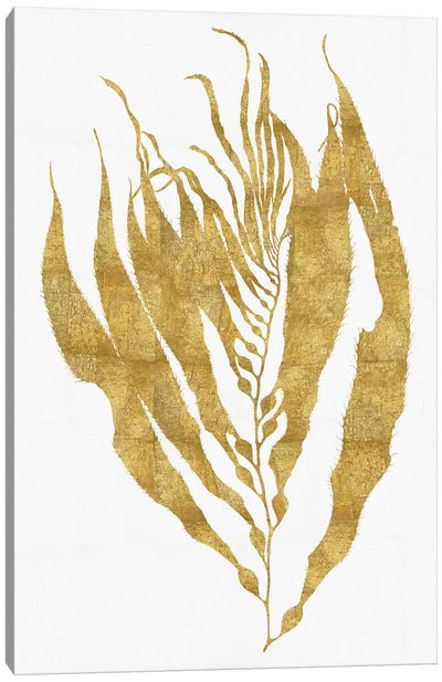 Sea Life Series: Gold On White I Canvas Art Print