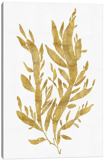 Sea Life Series: Gold On White IV Canvas Print #MMR18