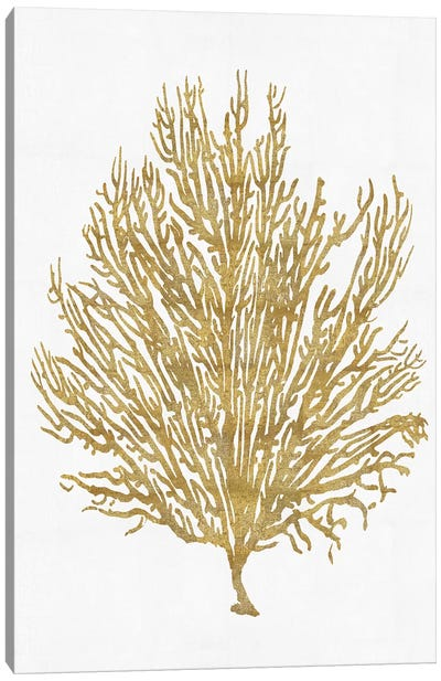 Sea Life Series: Gold On White V Canvas Print #MMR19
