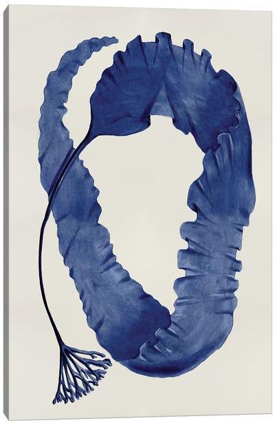 Sea Life Series: Indigo II Canvas Print #MMR24