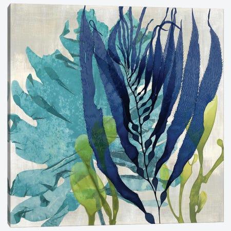 Sea Nature II Canvas Print #MMR28} by Melonie Miller Canvas Art Print