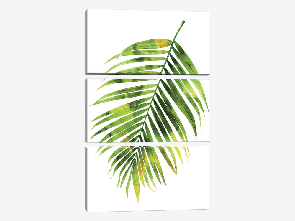 Green Palm I by Melonie Miller 3-piece Canvas Art Print