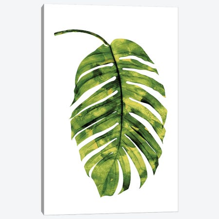 Green Palm II Canvas Print #MMR42} by Melonie Miller Canvas Art Print