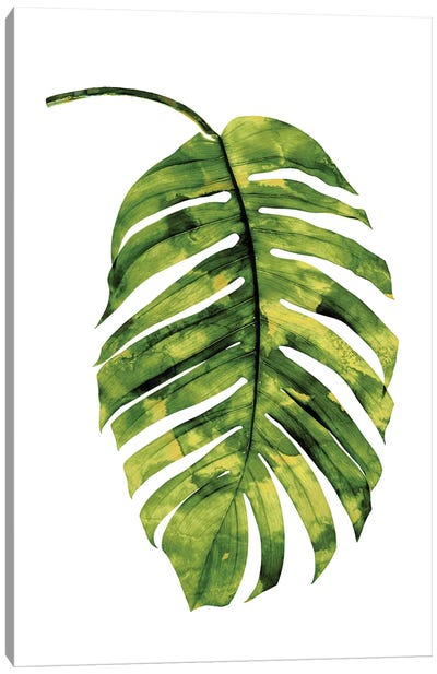 Green Palm II Canvas Art Print
