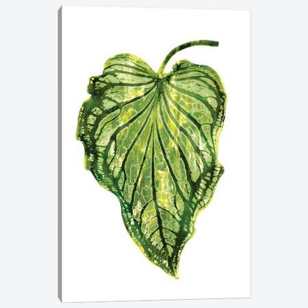 Green Palm III Canvas Print #MMR43} by Melonie Miller Canvas Art Print