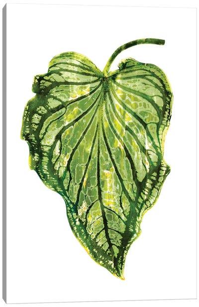 Green Palm III Canvas Art Print
