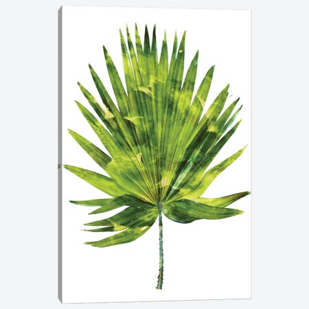 Green Palm IV Canvas Print #MMR44} by Melonie Miller Canvas Art