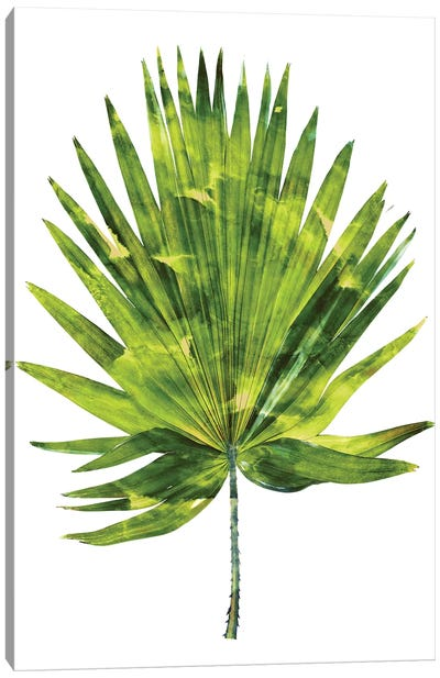 Green Palm IV Canvas Art Print