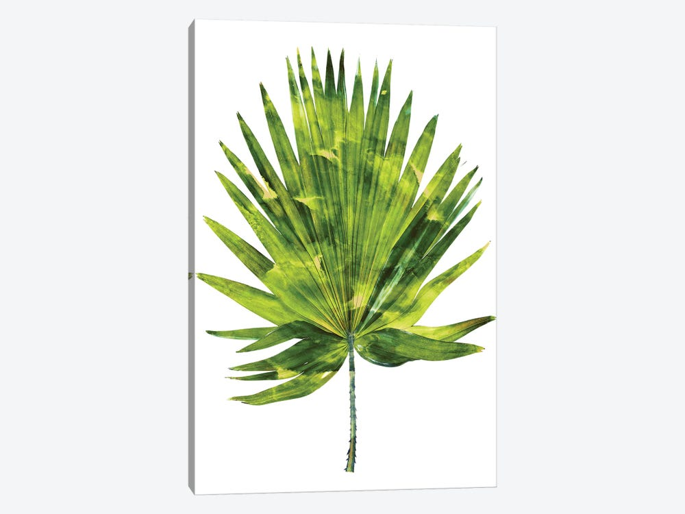 Green Palm IV by Melonie Miller 1-piece Canvas Art