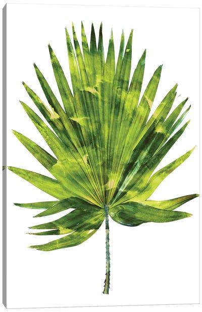 Green Palm IV Canvas Art Print
