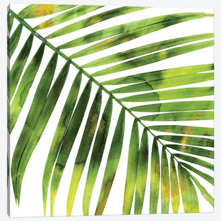 Green Palm, Close-Up I Canvas Print #MMR45} by Melonie Miller Canvas Artwork