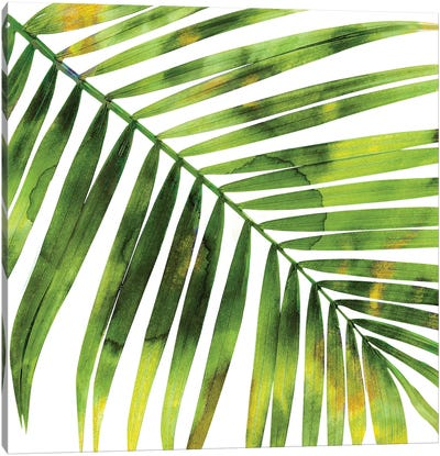 Green Palm, Close-Up I Canvas Art Print