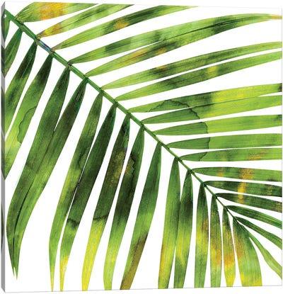 Green Palm, Close-Up I Canvas Art Print