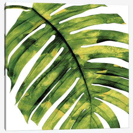 Green Palm, Close-Up II Canvas Print #MMR46} by Melonie Miller Canvas Wall Art