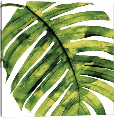 Green Palm, Close-Up II Canvas Art Print