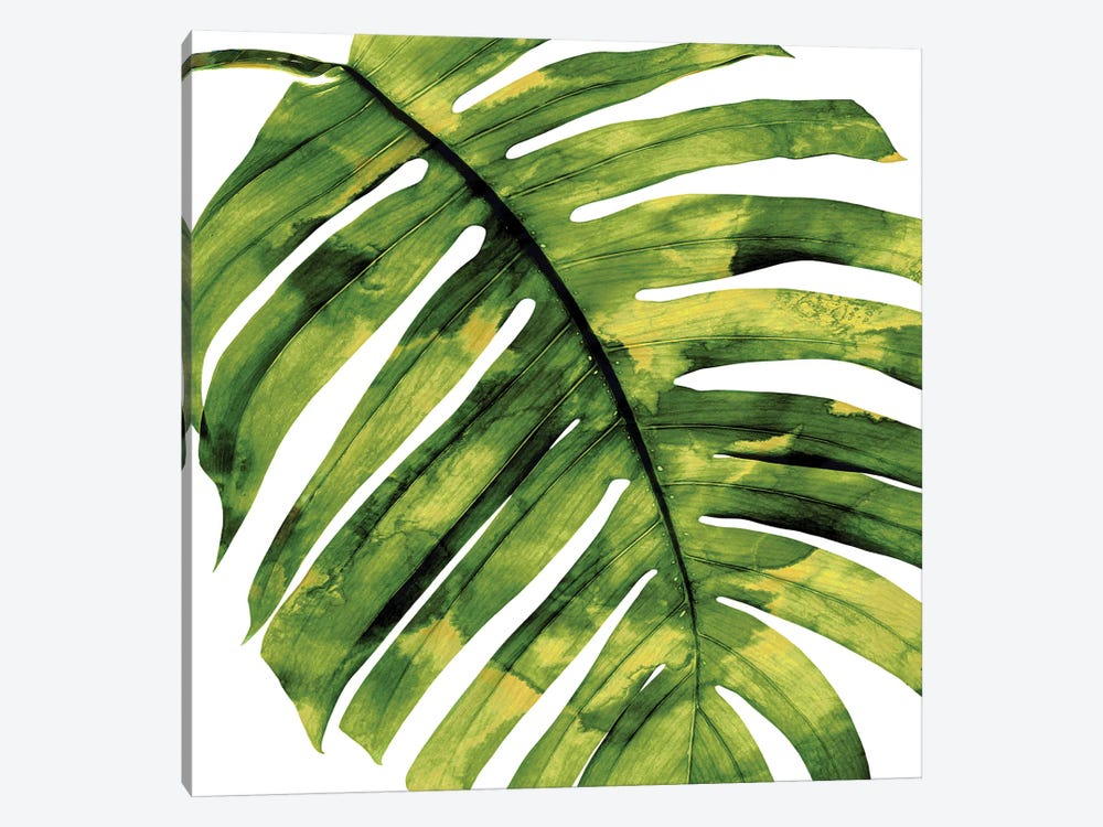 Green Palm, Close-Up II by Melonie Miller 1-piece Canvas Art