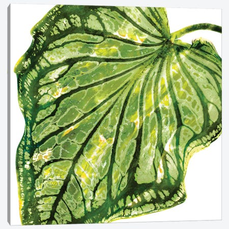 Green Palm, Close-Up III Canvas Print #MMR47} by Melonie Miller Canvas Artwork