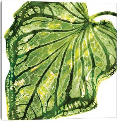 Green Palm, Close-Up III Canvas Art Print