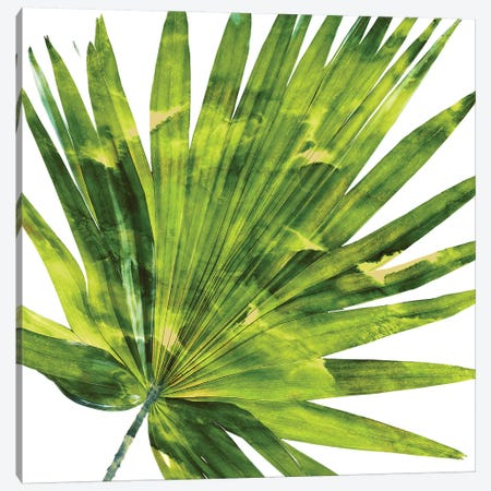 Green Palm, Close-Up IV Canvas Print #MMR48} by Melonie Miller Canvas Print