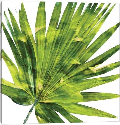 Green Palm, Close-Up IV Canvas Art Print