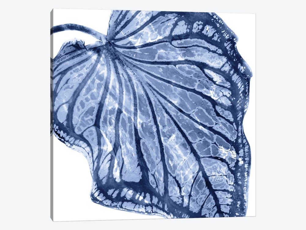 Indigo Palm, Close-Up III by Melonie Miller 1-piece Canvas Wall Art