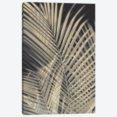 Palm Shadows Cream I Canvas Print #MMR61} by Melonie Miller Canvas Print