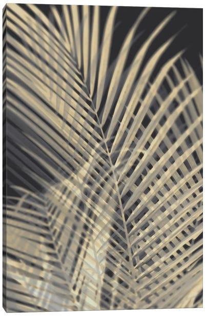 Palm Shadows Cream I Canvas Art Print