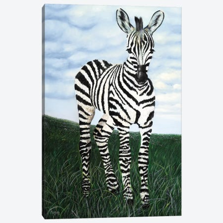At Attention Zebra Canvas Print #MMS1} by Megan Morris Canvas Print