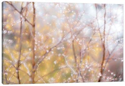 Drops Canvas Art Print
