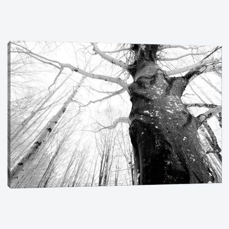 The Witch Tree Canvas Print #MMV24} by Mauro La Malva Canvas Art