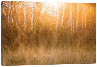 Day Claimax Canvas Art Print