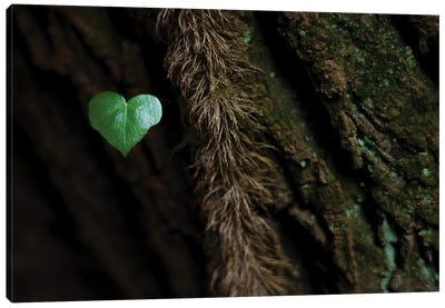 Heart Of The Trees Canvas Art Print