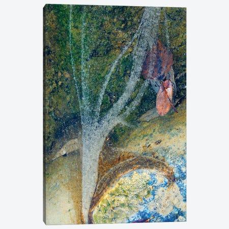 The Oxygen Tree Canvas Print #MMV38} by Mauro La Malva Canvas Artwork
