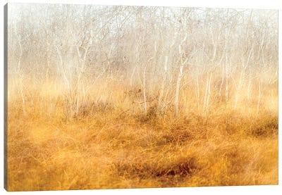 Dreaming Trees Canvas Art Print