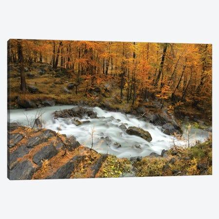 Autumn Canvas Print #MMV64} by Mauro La Malva Canvas Wall Art