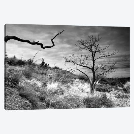 Thrilling Trees Canvas Print #MMV67} by Mauro La Malva Canvas Art