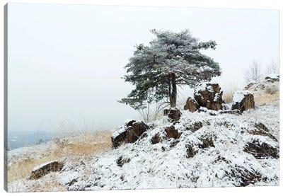 Beauty Under The Snow Canvas Art Print